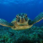 20 интересных фактов о черепахах