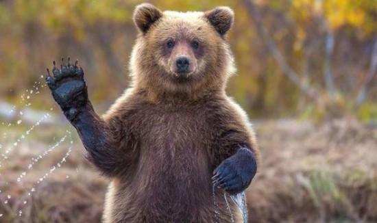 Факты о медведях