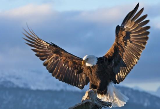 Факты об орлах