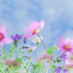 17 интересных фактов о цветах