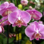 21 интересный факт об орхидеях