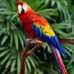 25 интересных фактов о попугаях
