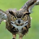 20 интересных фактов о совах