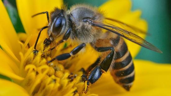 Факты о пчёлах