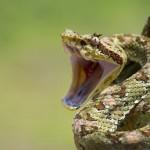 15 интересных фактов о змеях