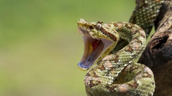 Факты о змеях.