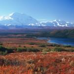 11 интересных фактов о тундре